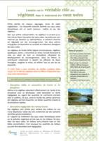 Le véritable rôle des végétaux dans le traitement des eaux usées